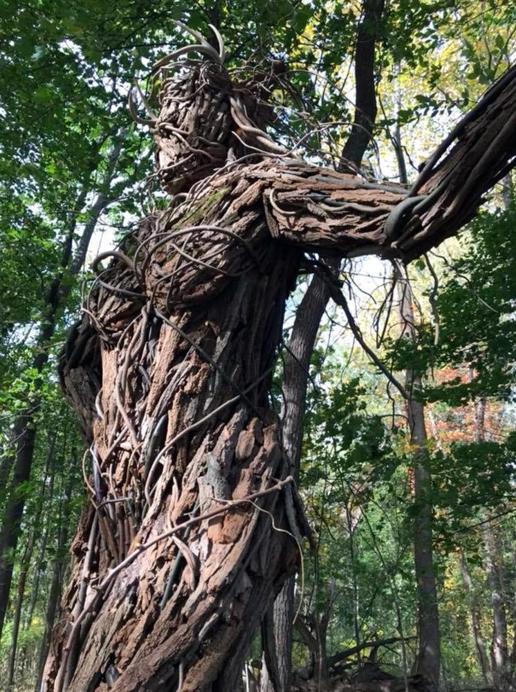amy-senn-sculpture-workshops-Forest